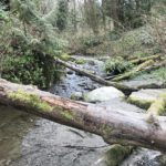 fallen logs across a creek framed by ferns and mossy rocks